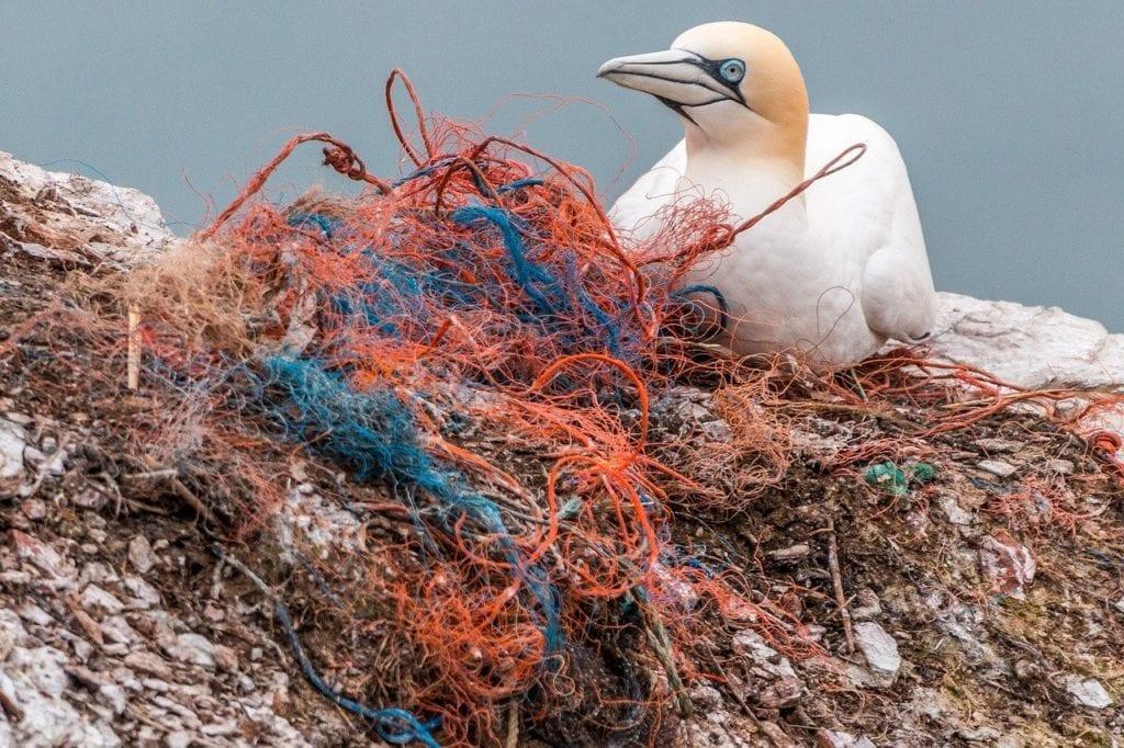 Seabird and plastic netting