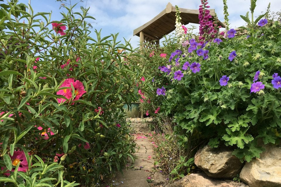 Image of garden in Gwernymynydd
