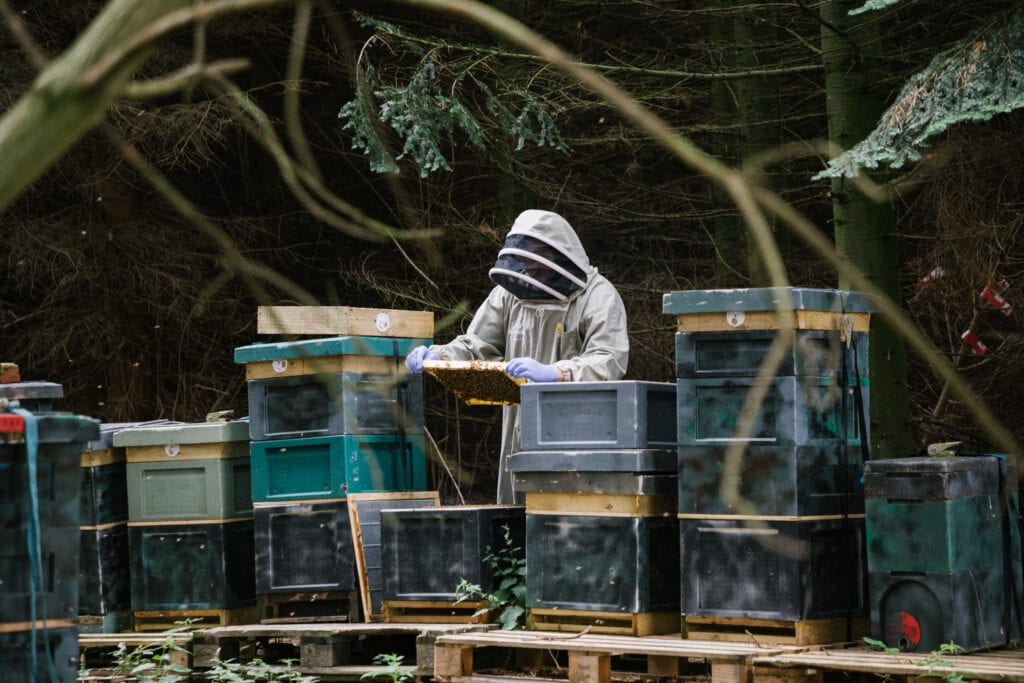 Laurence Edwards of Black Mountain Honey tending some of his beehives.