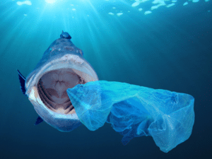 Shark with open mouth approaching plastic bag in ocean